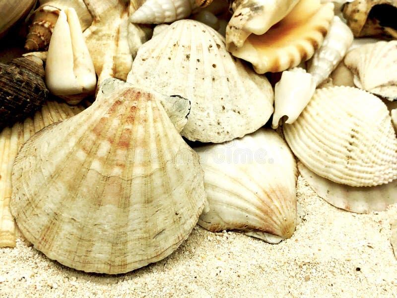 Концепция крупного плана перемещения каникул сезона лета раковины морских звёзд Seashell стоковое фото rf