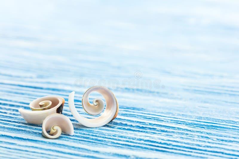 Концепция летних отпусков с спиральными раковинами на деревянной сини стоковое фото rf