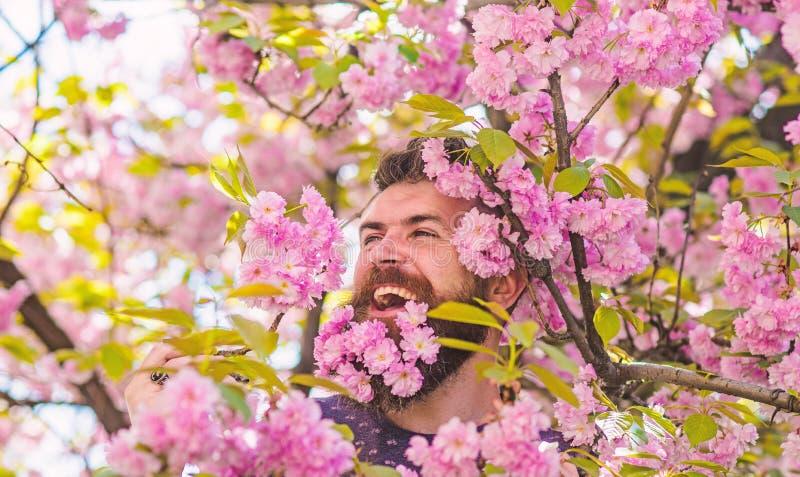 Концепция нежности Человек с бородой и усик на счастливой стороне около нежных розовых цветков Бородатый человек со свежей стрижк стоковое изображение