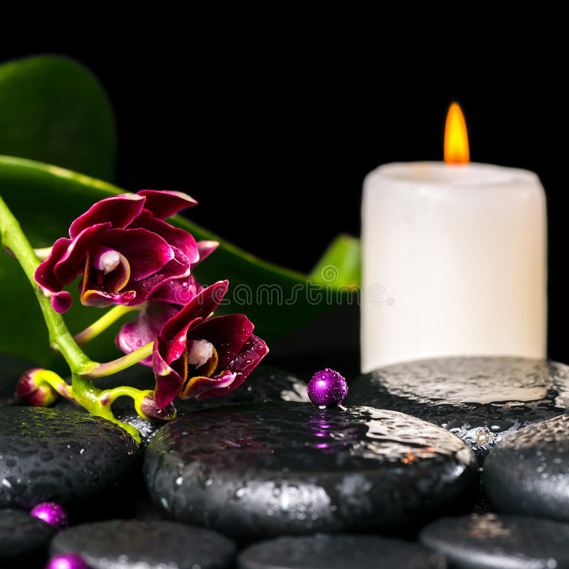 Концепция орхидеи цветка, фаленопсис курорта, свеча стоковые фото