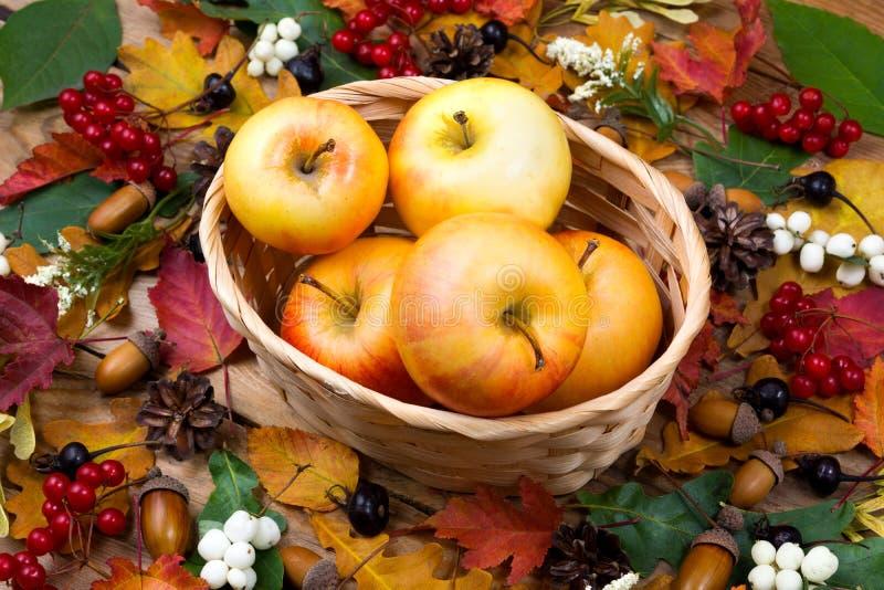 Концепция падения с яблоками в плетеной корзине стоковое изображение rf