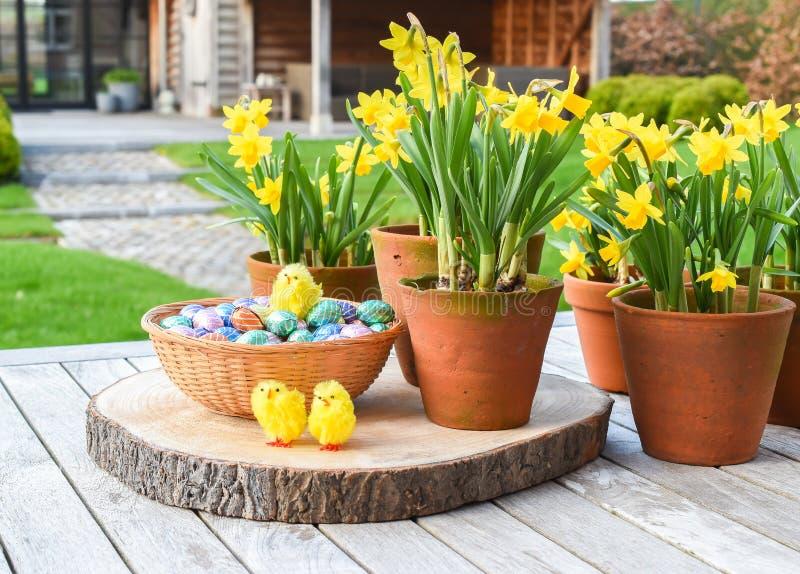 Концепция пасхи: Narcissus и пасхальные яйца стоковое изображение