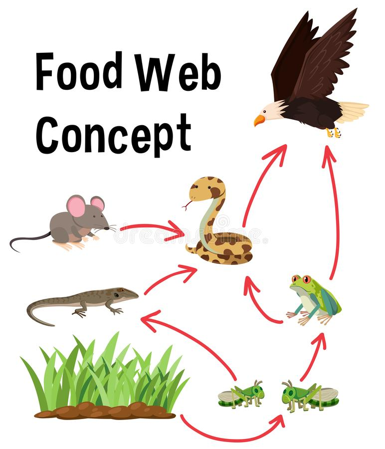 Концепция пищевой сети науки иллюстрация вектора