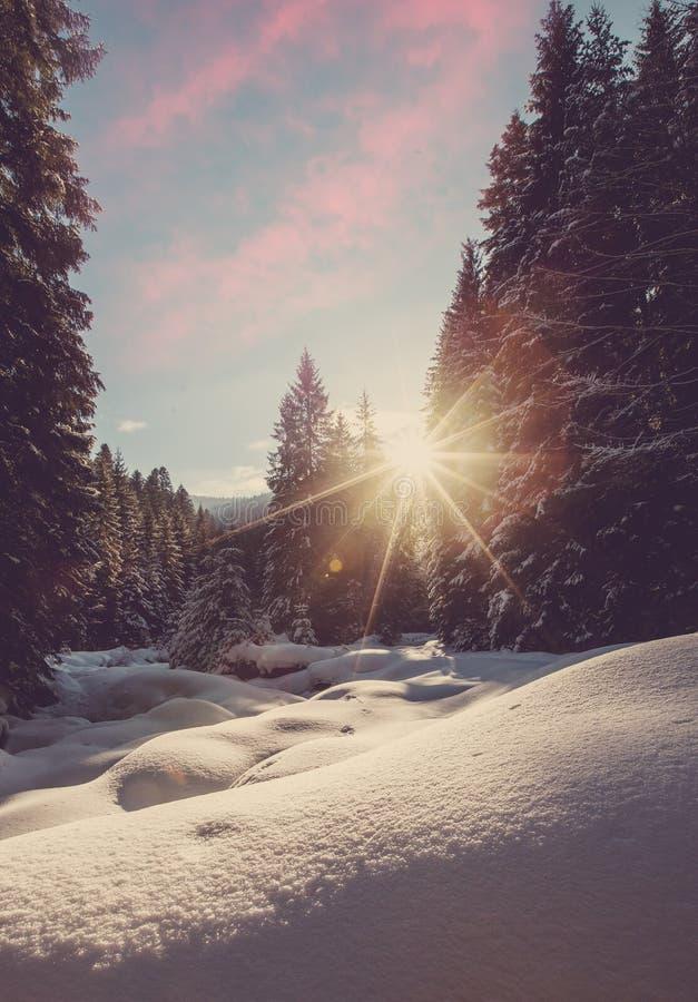 Величественный ландшафт зимы морозная сосна под солнечным светом на заходе солнца концепция праздника рождества, необыкновенное ч стоковые фото