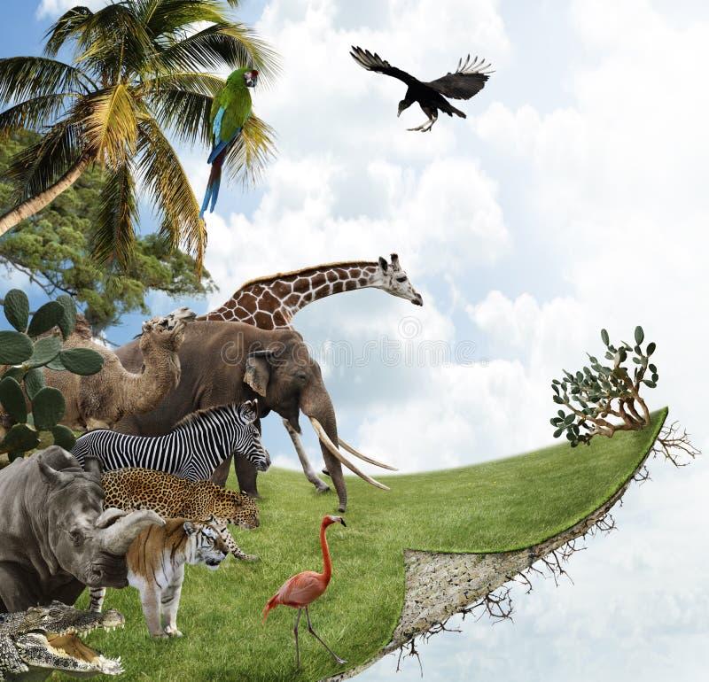 Концепция природы стоковое изображение