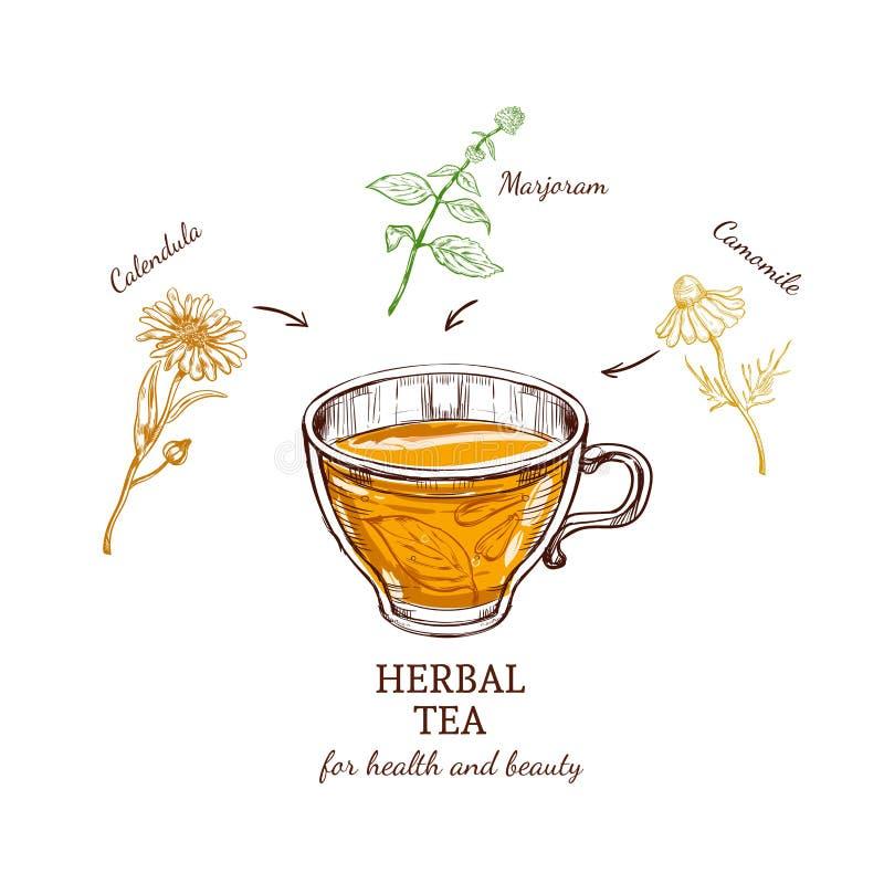 Концепция рецепта травяного чая иллюстрация вектора