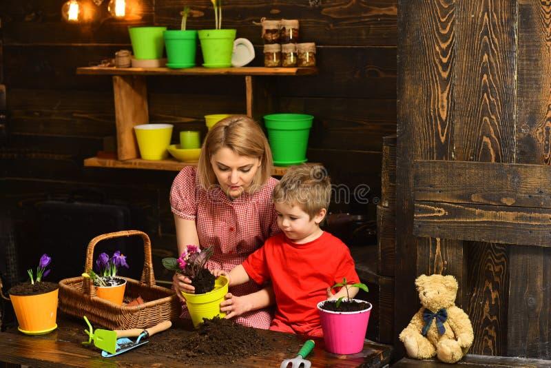 Концепция сада Немногое цветок производства керамических изделий матери помощи ребенка в новом баке, саде Домашний сад Добро пожа стоковая фотография