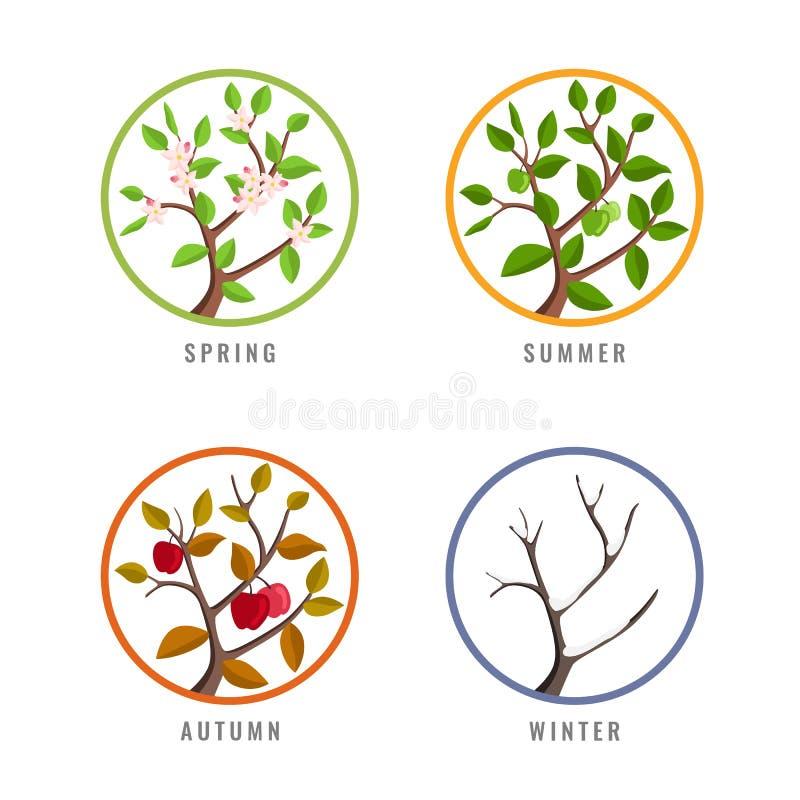 Концепция 4 сезонов с зимой осени лета изменения сезона яблони весной в дизайне вектора знака круга иллюстрация вектора