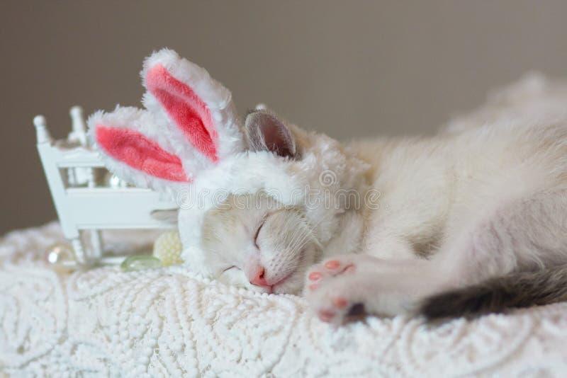 Концепция сна детей Спать котенка стоковое фото rf