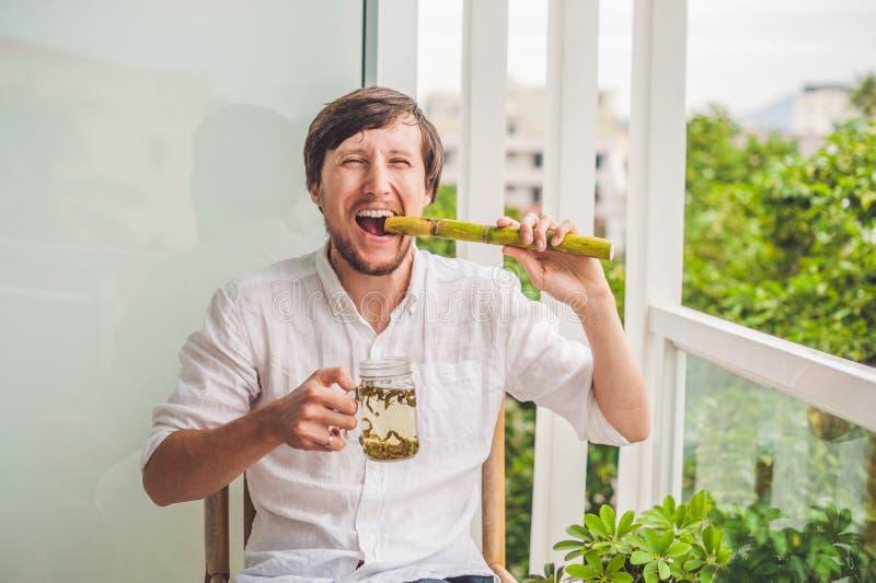 Концепция тростникового сахара Человек в шутку есть чай сахарного тростника и пить стоковые фотографии rf