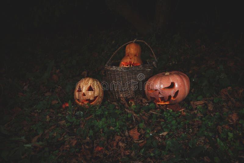 Концепция хеллоуина Злая страшная тыква в корзине в фонарике jack леса мистическом в темноте стоковое изображение rf
