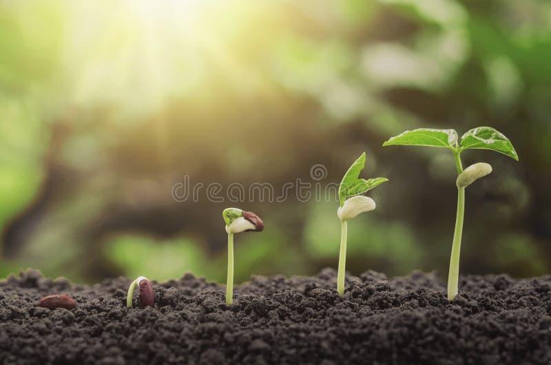 концепция шага завода земледелия осеменяя растущая в саде и su стоковые фото