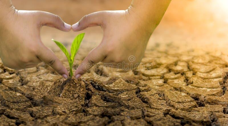 Концепция экологического восстановления рост саженцев на треснутой почве, треснутой почве в засушливом сезоне повлиянном на мимо стоковая фотография rf