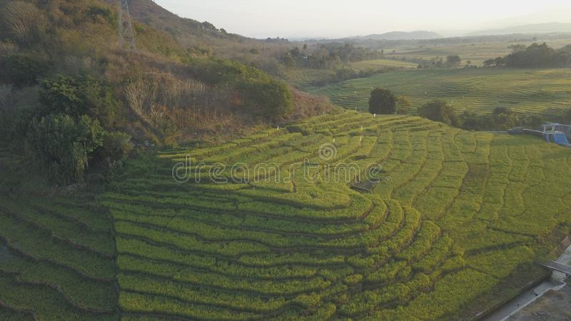 Концепция Terracing рисовой посадки стоковое фото