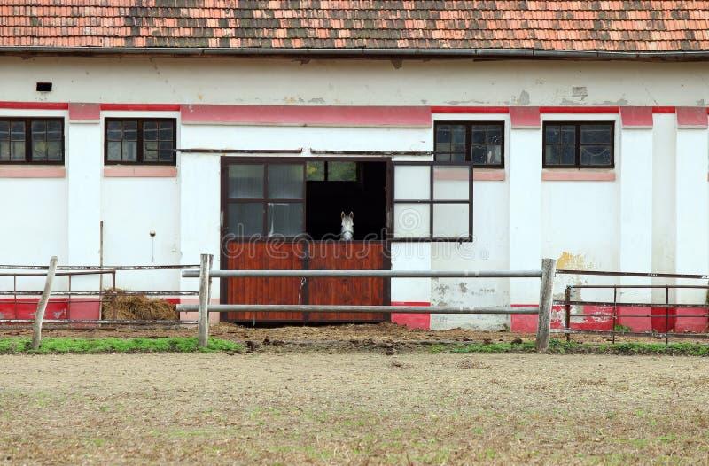 Конюшня с белой лошадью стоковые изображения rf