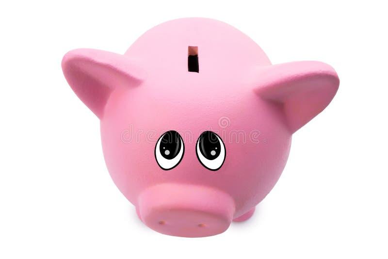 Копилка свиньи просит деньги смотря камеру стоковое фото