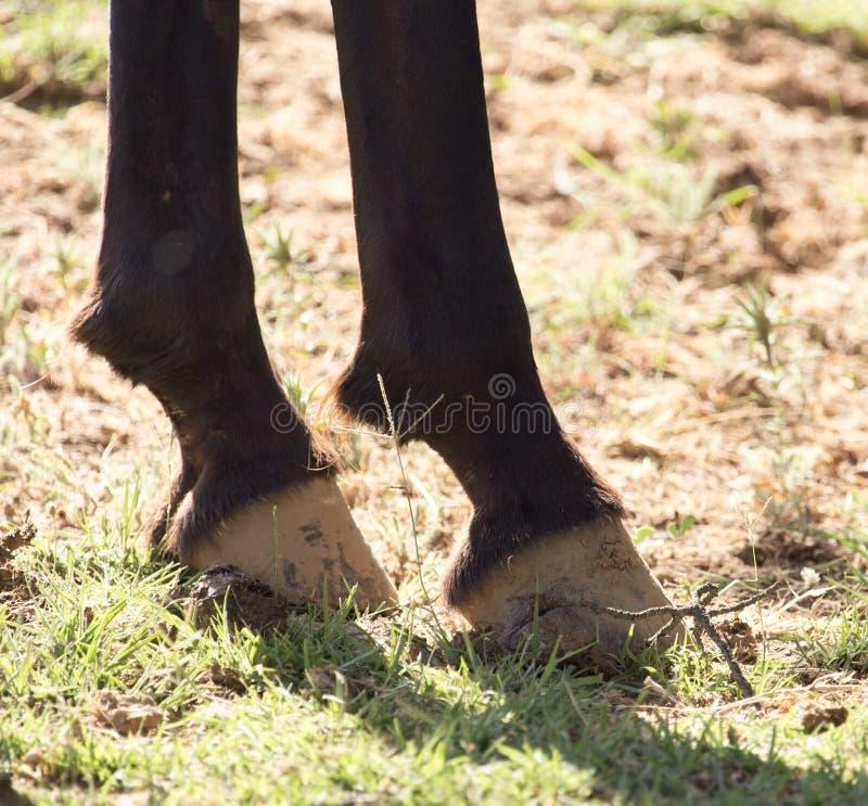 Копыта ` s лошади стоковое фото rf
