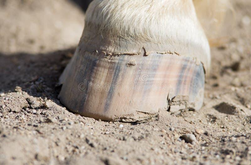 Копыто лошади стоковое изображение rf
