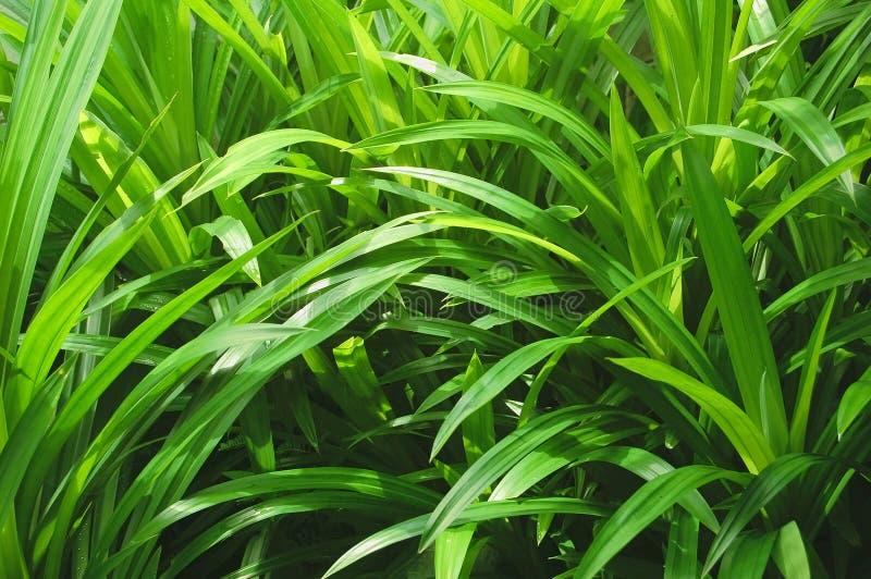 копье листьев стоковое фото