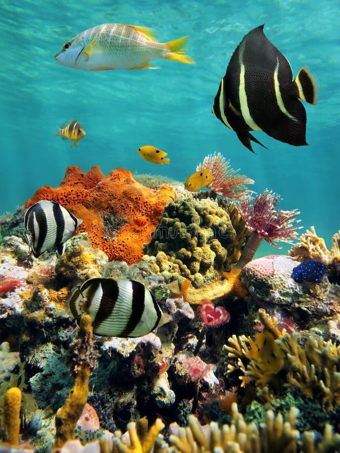 Коралловый риф и тропические рыбы с водой отделывают поверхность стоковая фотография rf