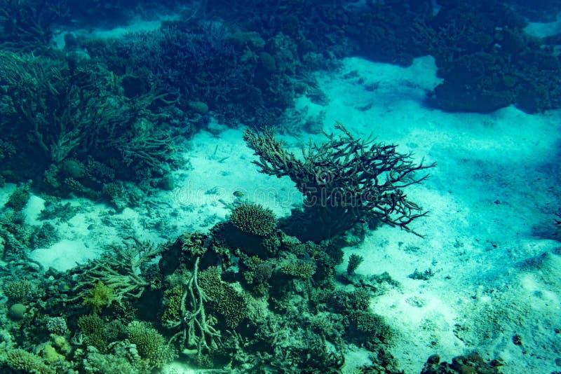 Коралловый риф Красного Моря при трудные кораллы, рыбы и солнечное небо светя через чистую воду - подводное фото тонизировано стоковая фотография