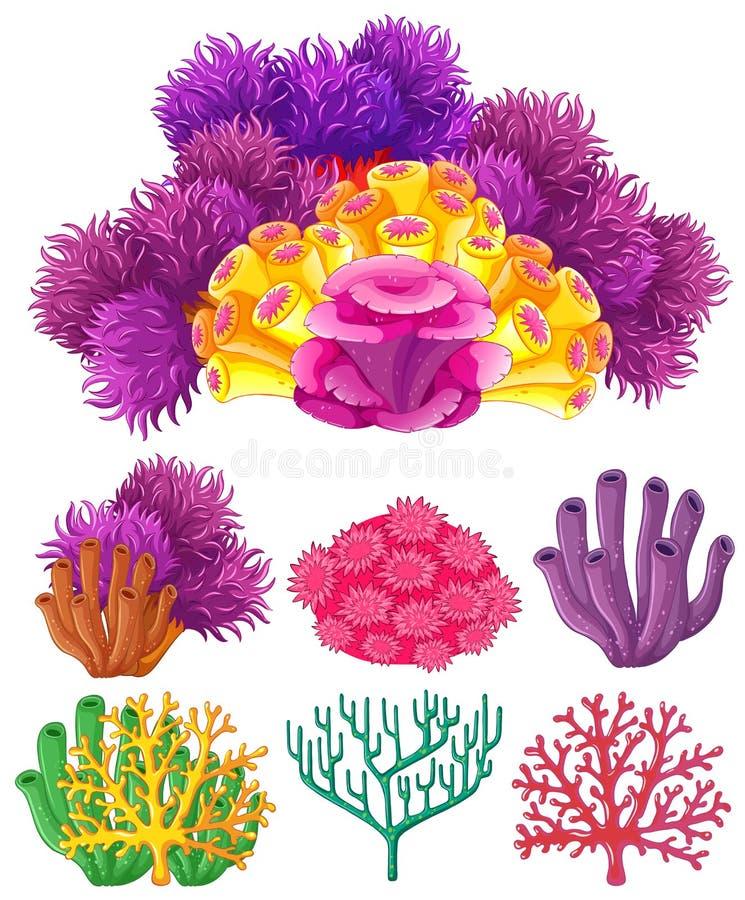 Коралловый риф на белой предпосылке бесплатная иллюстрация
