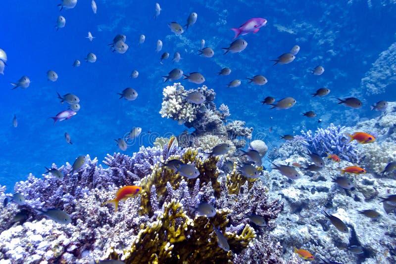 Коралловый риф на дне Красного Моря с hard, fi стоковые фото