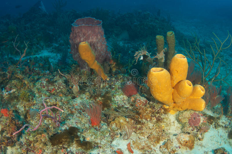 коралловый риф состава стоковая фотография rf