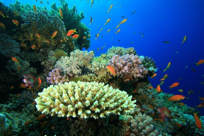 коралловый риф стоковое фото rf