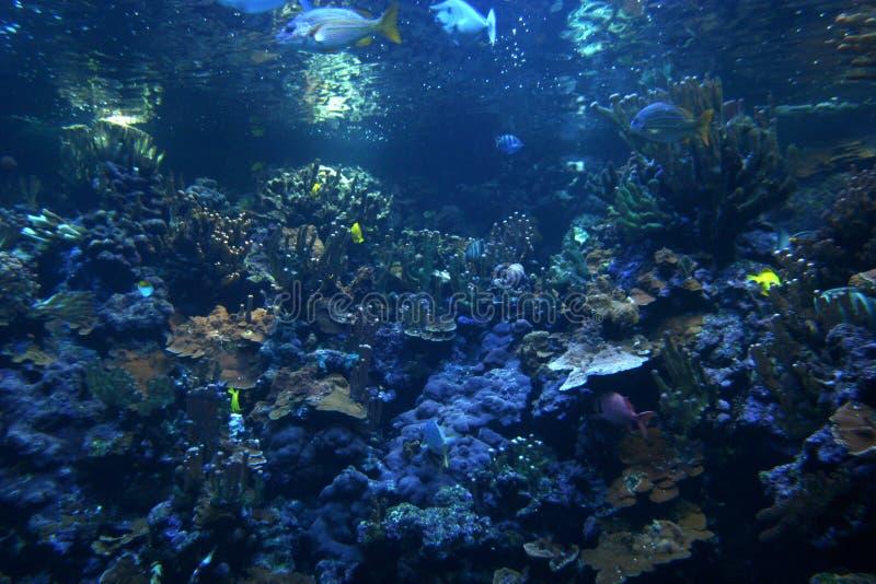 коралловый риф стоковая фотография rf