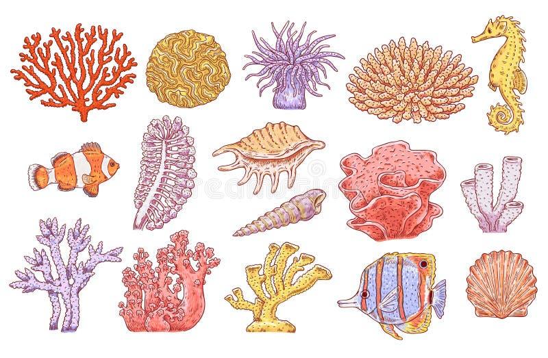 Кораллы заводов вектора подводные удят набор раковины бесплатная иллюстрация