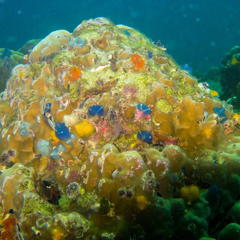 Кораллы на камне, много цвета и малый стоковое изображение rf