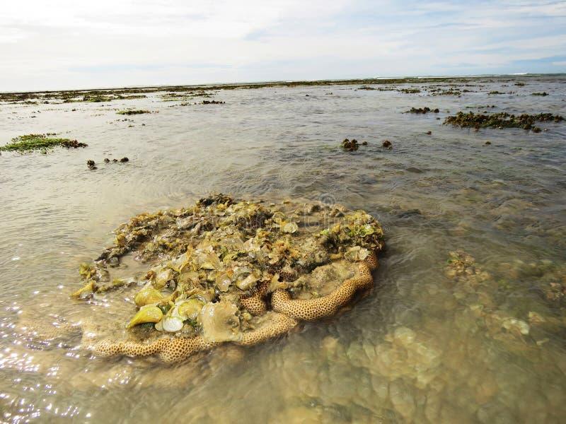 Коралл мозга и seascape, остров Kurusadai, залив запаса биосферы Mannar, Tamil Nadu, Индии стоковая фотография rf
