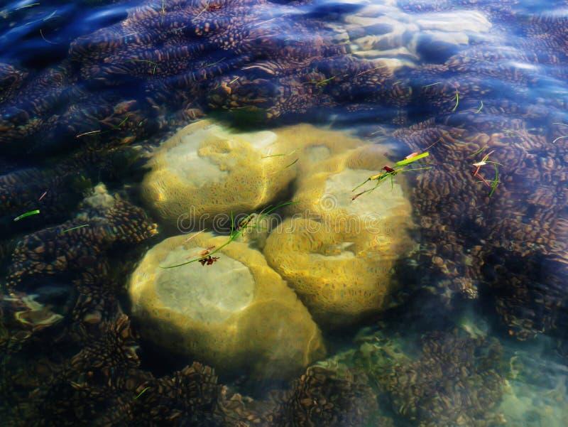 Коралл мозга, остров Nallathanni, залив запаса биосферы Mannar, Tamil Nadu, Индии стоковые изображения rf