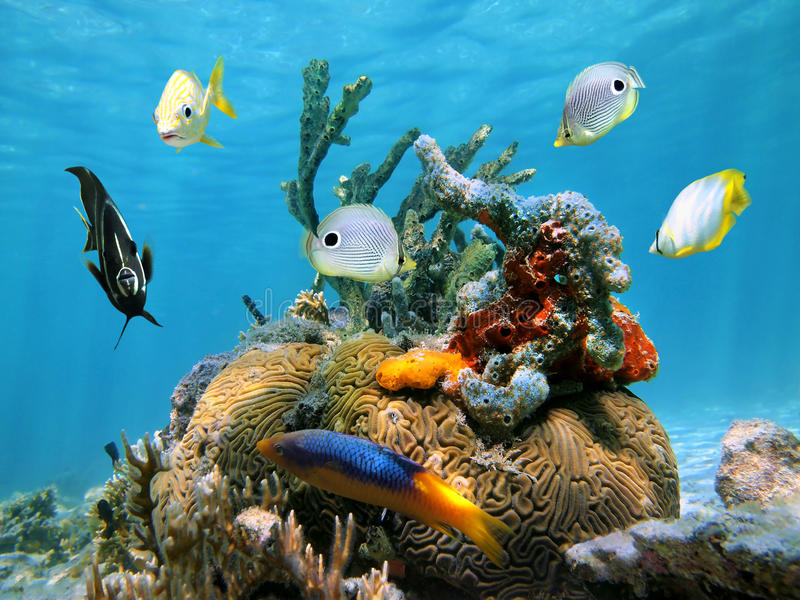 Коралл мозга с цветастыми губками и рыбами моря стоковая фотография rf