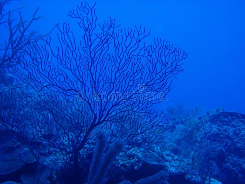 коралл мягкий стоковая фотография rf