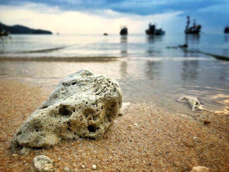 Коралл на пляже стоковое изображение rf