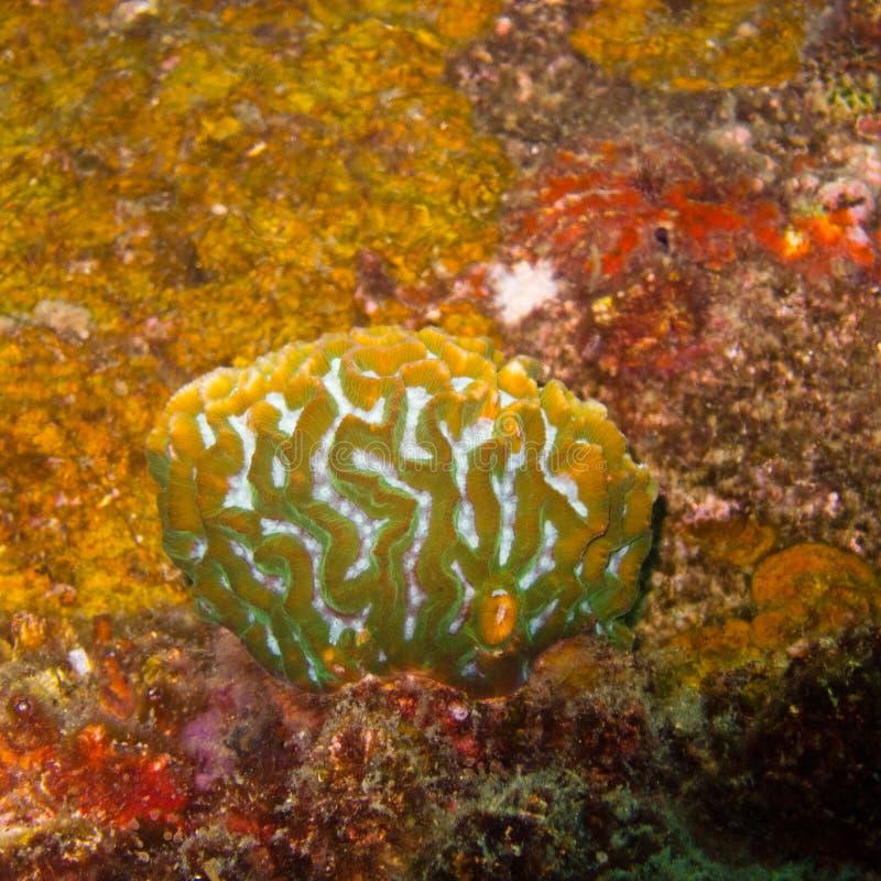 Коралл подводный, оранжевые цвета в Таиланде стоковая фотография