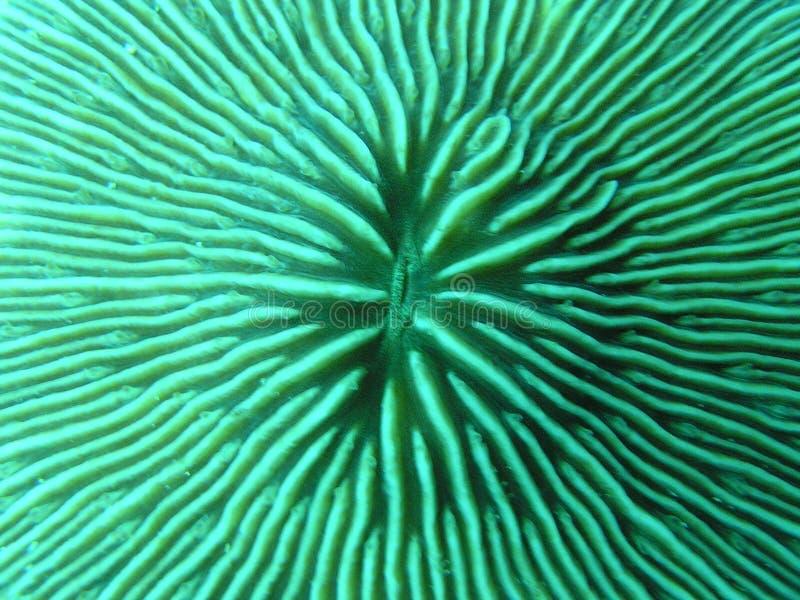 коралл стоковое фото rf