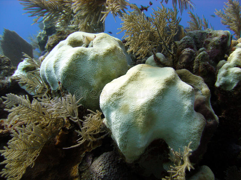 коралл bleaching стоковое изображение rf