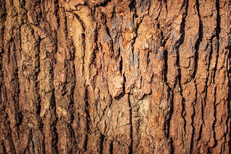 Кора большого конца дерева вверх стоковые фотографии rf