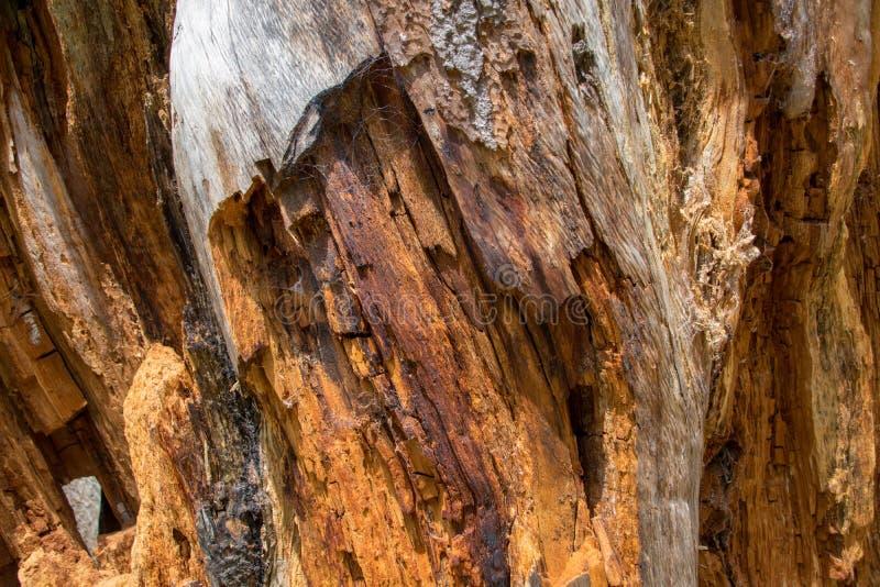 Кора дерева закрывает вверх, текстурирует и формирует стоковые изображения rf