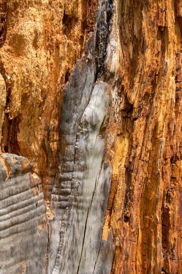 Кора дерева закрывает вверх, текстурирует и формирует стоковая фотография rf