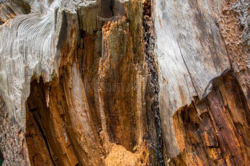 Кора дерева закрывает вверх, текстурирует и формирует стоковое фото