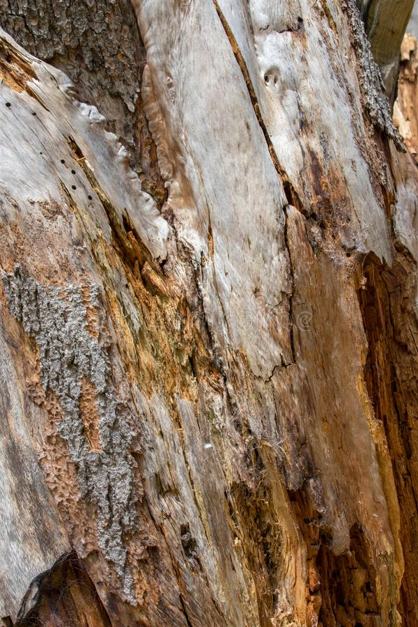 Кора дерева закрывает вверх, текстурирует и формирует стоковые фотографии rf