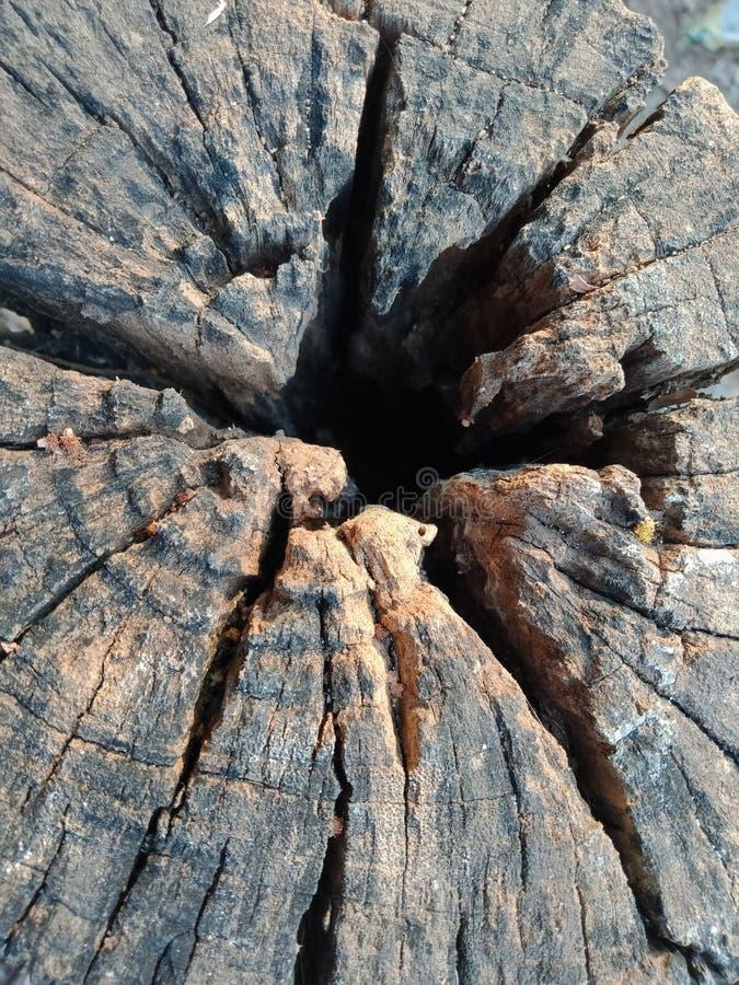 Кора дерева текстурировала предпосылку, обои ландшафта природы стоковые фото