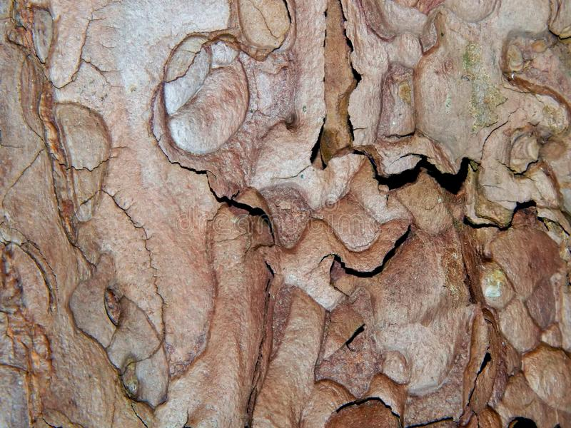 Кора дерева Aspen стоковое фото