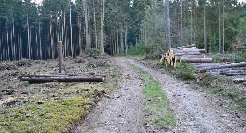 Кора жук-заразила деревья, тимберс готовый для перехода, южную Богемию стоковая фотография rf