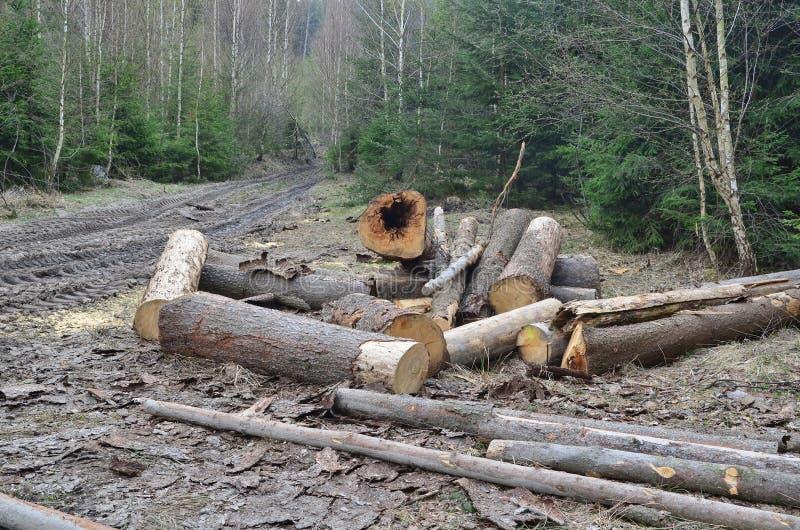 Кора жук-заразила деревья, тимберс готовый для перехода, южную Богемию стоковое фото