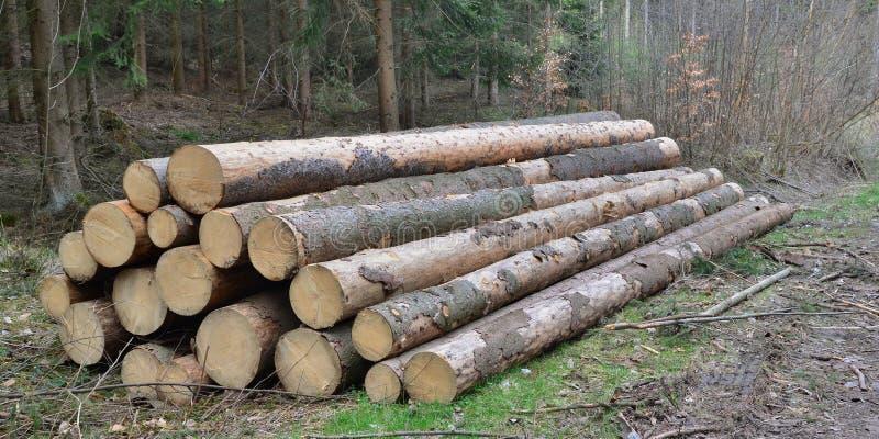 Кора жук-заразила деревья, тимберс готовый для перехода, южную Богемию стоковое изображение